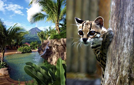 Costa Rica is a wildlife and botanical paradise